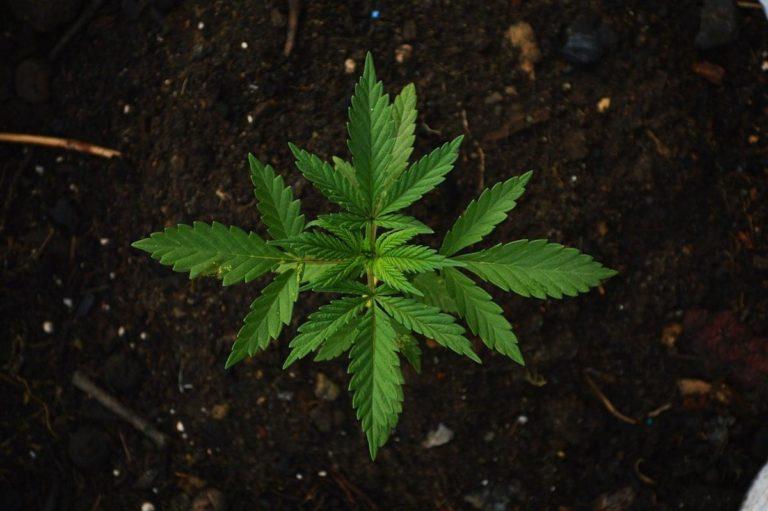 Co zrobić żeby w skrzynce w której uprawiacie rośliny była niższa temperatura?